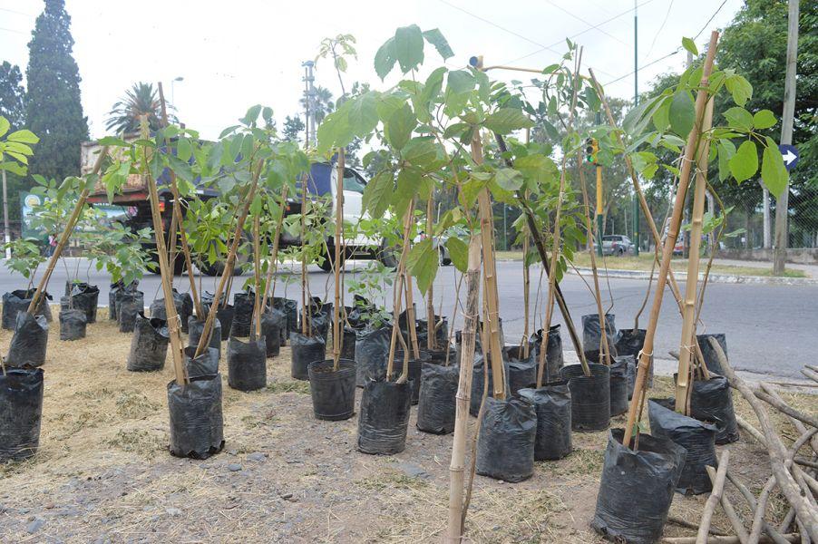 Desde principio de año se plantaron 2.004 arboles como parte del plan de arbolado urbano.