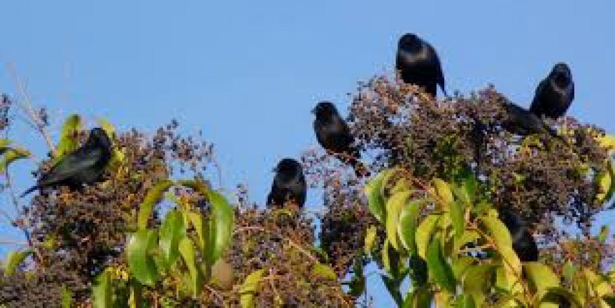 Las aves y su relación con el turismo.