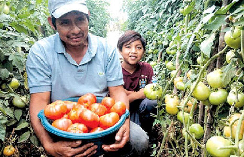 La comercialización de frutas y verduras producidas por familias del Chaco Salteño se hará dentro de las comunidades.