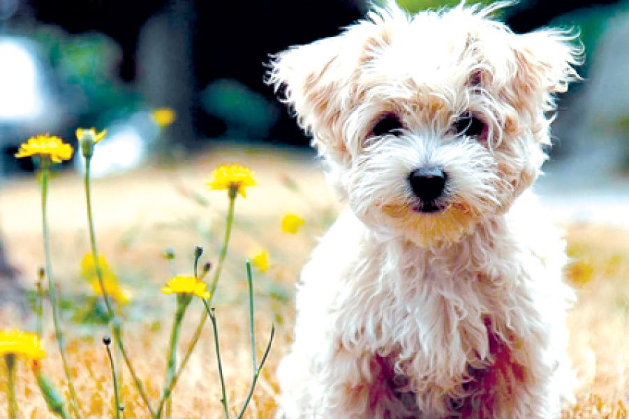Las mascotas y su tenencia en el hogar y un hospital veterinario tratarán los ediles.