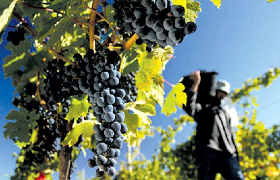 La provincia se moviliza en rechazó las políticas que impulsa Nación para el sector vitivinícola que afecta a las economías regionales.