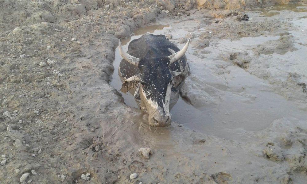 Los habitantes y productores de la zona vienen reclamando que sufrieron grandes pérdidas de animales y sembradíos.