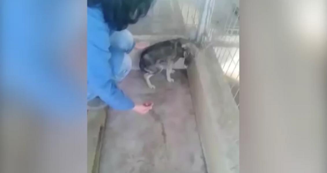 La escalofriante reacción de un perro maltratado que es acariciado por primera vez