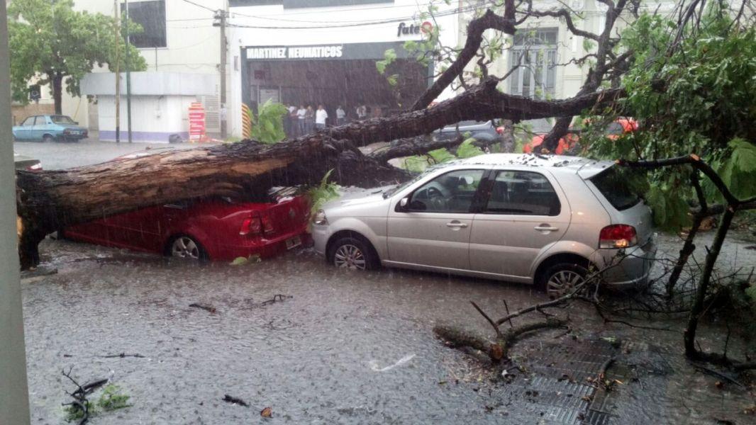 En la esquina de Sarmiento y Gúemes un árbol  dañó a dos vehículos. (Foto gentileza Natalia Rodríguez)