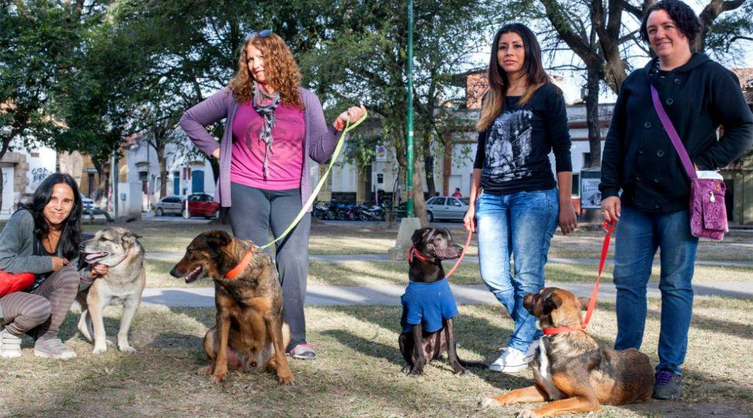 Celebran desde hoy en salta el d a del animal salta Noticias del dia de hoy en argentina espectaculos