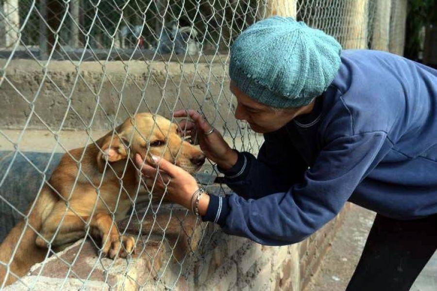 En Salta y todo el país por el Día del Animal con actividades se concientiza sobre la importancia de la adopción responsable.