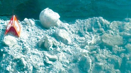 Los huesos fueron encontrados por operarios que estaban realizando la obra del cordón cuneta en un barrio de Metán.