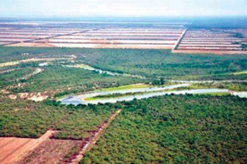 """La Provincia quiere otorgar mediante arriendo """"parcelas y/o lotes de Salta Forestal SA de hasta 2.000 hectáreas."""