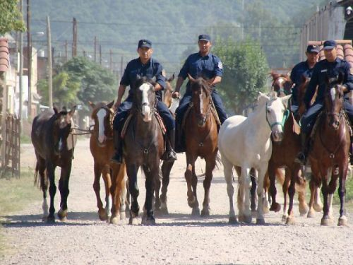 El Ministerio de Salud se convertirá en el depositario judicial de los caballos