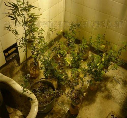 Los plantines del joven de 25 años que reside en Orán.