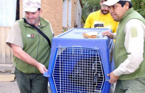 El ave rescatada por guardaparques