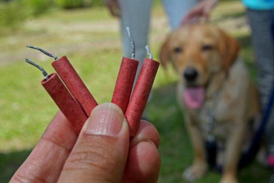 Proteccionistas de animales y numerosas demandas de vecinos, son los férreos opositores del uso de pirotecnia sonora.