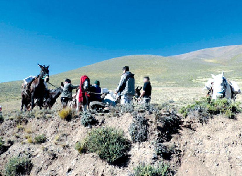 El personal de Gendarmería para extraer elementos contaminantes en Parque Los Cardones debió ascender a lomo de mulas y caballo.