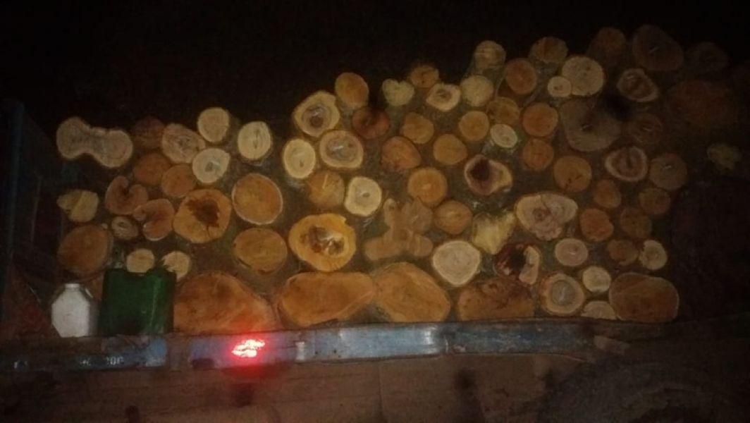 La madera ilegal era transportada en camiones y tractores.