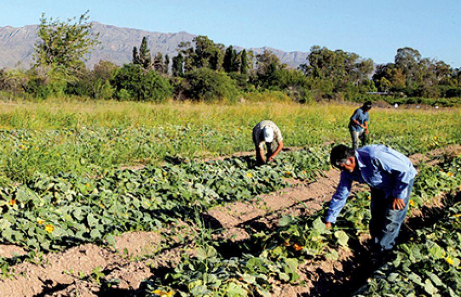 El perjuicio por el retraso de los ingresos afecta a cerca de 20 mil obreros rurales y sus familias en Salta.