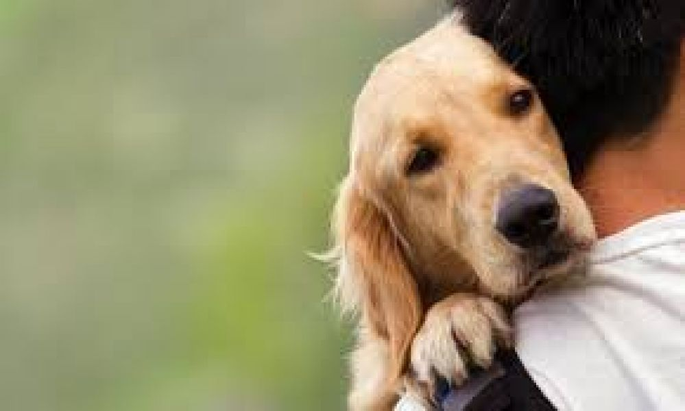 Se esperan alcanzar las 15 mil castraciones de mascotas este año en la capital de Salta.