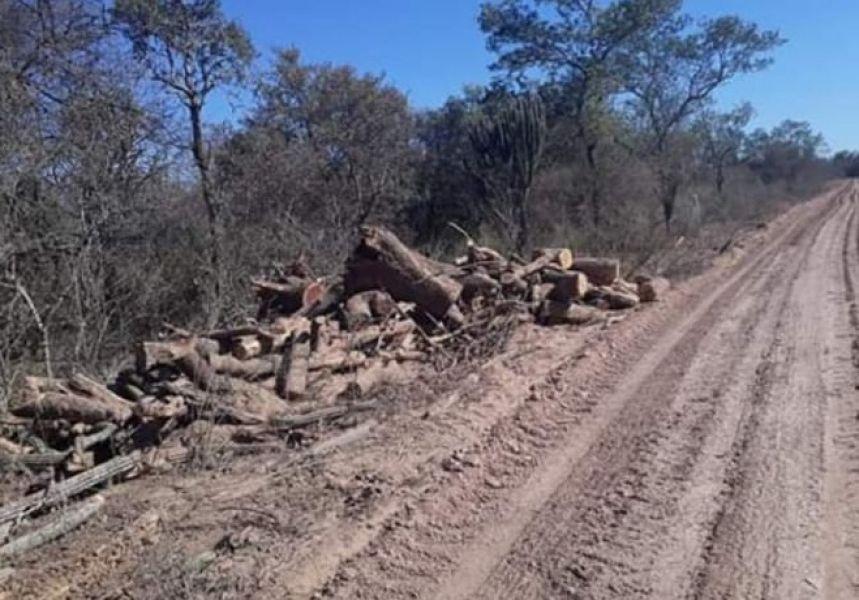 El desmonte es solo uno de los reclamos a la empresa petrolera de los dueños de la finca en Rivadavia.