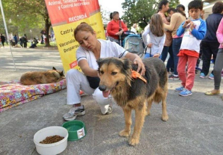 Muchos perros acompañan a los peregrinos, el objetivo es evitar que se extravíen durante la festividad del Milagro.