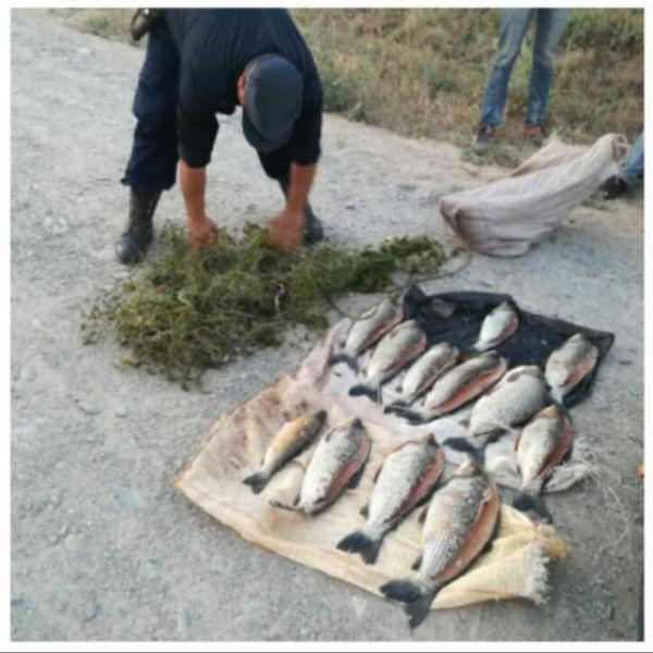 Se detectó otro cargamento de pesca furtiva en Los Horcones, departamento Rosario de la Frontera.