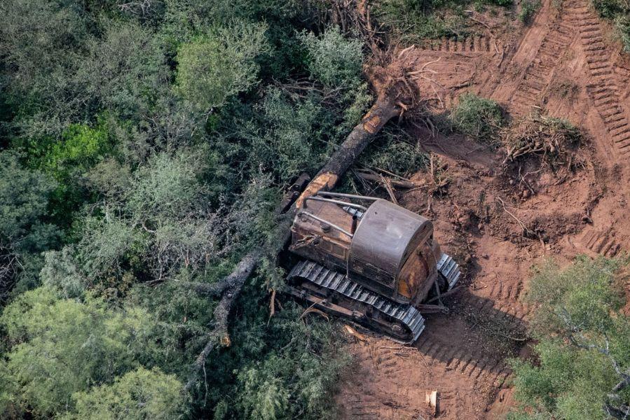 Arrasados los montes los wichís se quedan sin alimentos naturales, aseguran desde la organización Greenpeace.